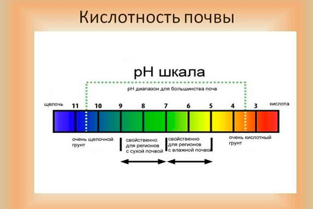 kislotnost-6